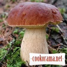 Вся правда і міфи про гриби