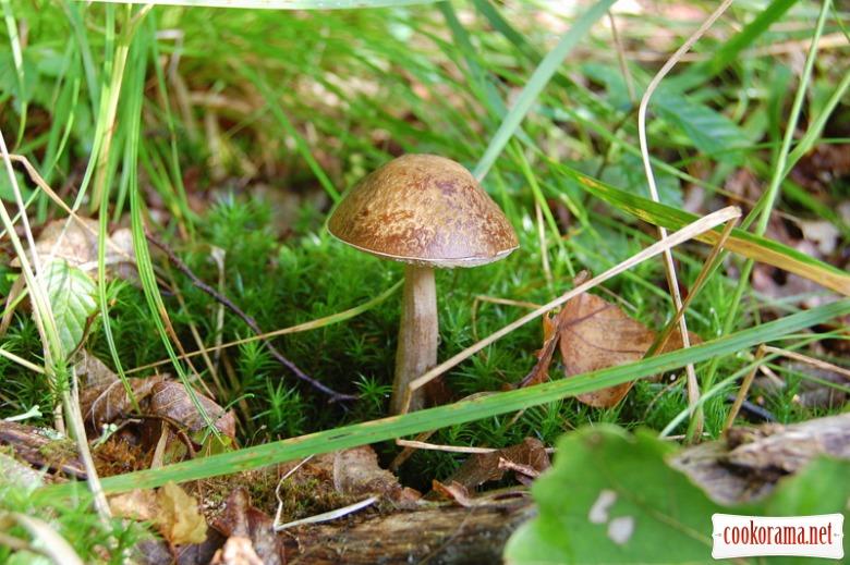 Чим далі в ліс, тим більше грибів?