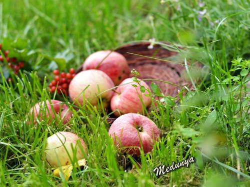 З Яблучним Спасом!!!