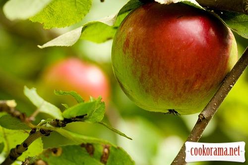 Яблука !!!