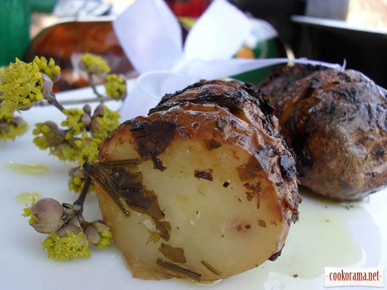 Картофель «Золушка»