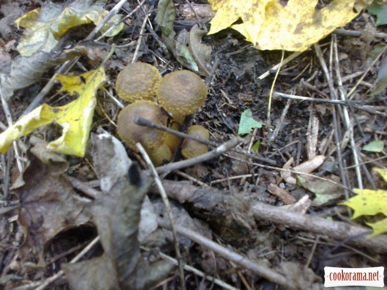 Пиріжки з лісовими грибами та картоплею