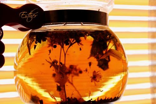 Бджолиний чай