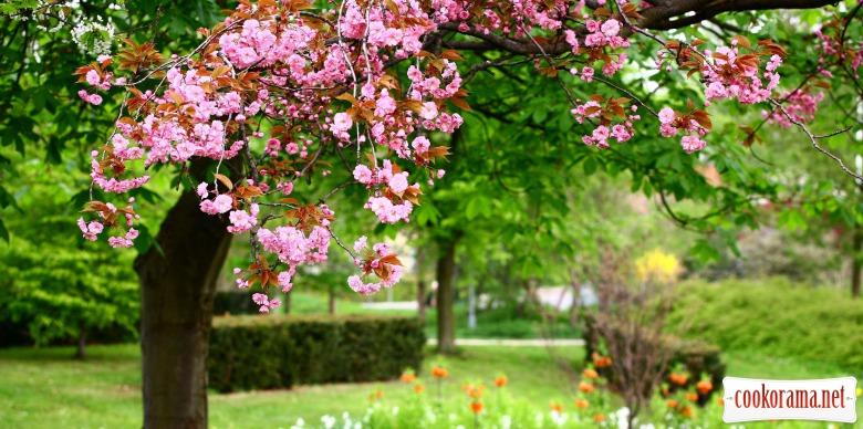 Торт «Весняний сад»