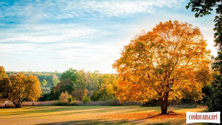 « 40 натхнень для казкової осені»